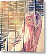 Turkey In The Cage Metal Print
