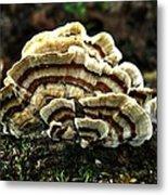 Turkey Tail Fungi Metal Print