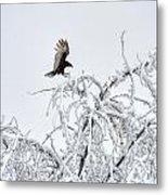 Turkey Vulture In The Snow Metal Print