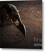 Turkey Vulture Skull On Slate Metal Print