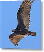 Turkey Vulture Soaring Overhead Drb153 Metal Print
