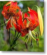Turkish Cap Lily  Metal Print