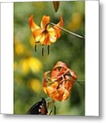 Turks Cap Lilies And Butterfly Metal Print