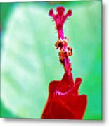 Turks Cap With Visitors Metal Print