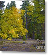 Turning For Autumn Metal Print