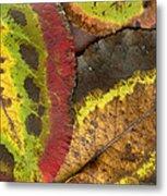 Turning Leaves 2 Metal Print