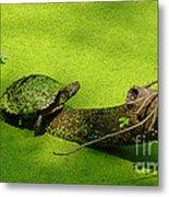 Turtle-190 Metal Print