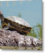 Turtle At The Lake Metal Print