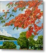 Turtle Bay Virgen Islands Metal Print