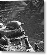 Turtle Bw Metal Print