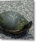 Turtle Crossing Metal Print
