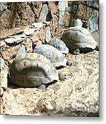 Turtle Desert Metal Print