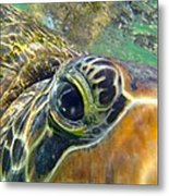 Turtle Eye Metal Print