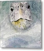 Turtle Face Metal Print