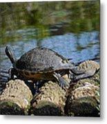 Turtle Float Metal Print