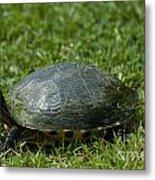 Turtle Grass Metal Print