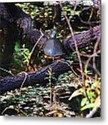 Turtle In The Glades Metal Print