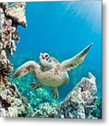 Turtle In Tropical Ocean Metal Print