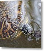 Turtle Kiss Metal Print by Julie Cameron