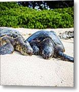 Turtle Lovin Metal Print