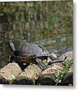 Turtle On A Raft Metal Print