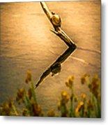 Turtle On Golden Pond Metal Print