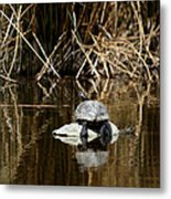 Turtle On Turtle Metal Print by Ernie Echols