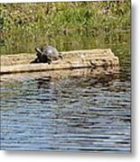 Turtle Raft Metal Print