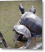 Turtle Trio Metal Print
