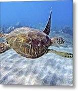 Turtle Underwater 3 Metal Print