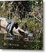 Turtles And Gator Metal Print