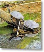 Turtles At The National Zoo Metal Print
