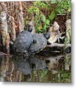 Turtles  Metal Print by Julie Cameron