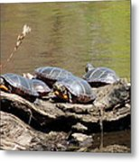 Turtles Metal Print