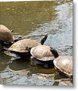 Turtles On A Log Metal Print