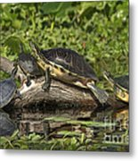 Turtles Sunning Metal Print