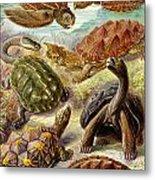 Turtles Turtles And More Turtles Metal Print