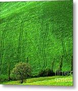 Tuscan Hills 05 Metal Print by Giorgio Darrigo