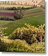 Tuscan Hills Metal Print by Michael Swanson