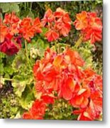 Tuscany Flower Garden Metal Print