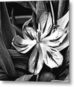 Tussled Metal Print