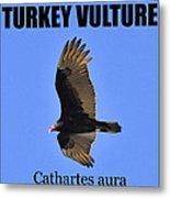 Turkey Vulture Educational Metal Print