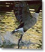 Twilight Goose I Metal Print