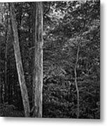 Twilight Woods #1 Metal Print