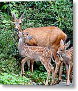Twin Fawns And Mother Deer Metal Print