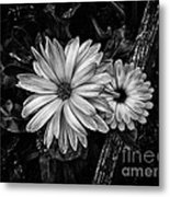 Twin Flowers And A Branch  Metal Print