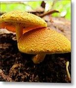 Twin Fungi Metal Print