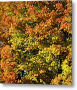 Twin Maples Metal Print