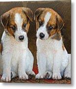 Twin Puppies Portrait Metal Print