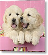 Twin White Labs In Pink Basket Metal Print by Greg Cuddiford
